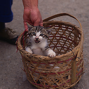 Kitten for sale in a Street Market in the city of Shexian, China.