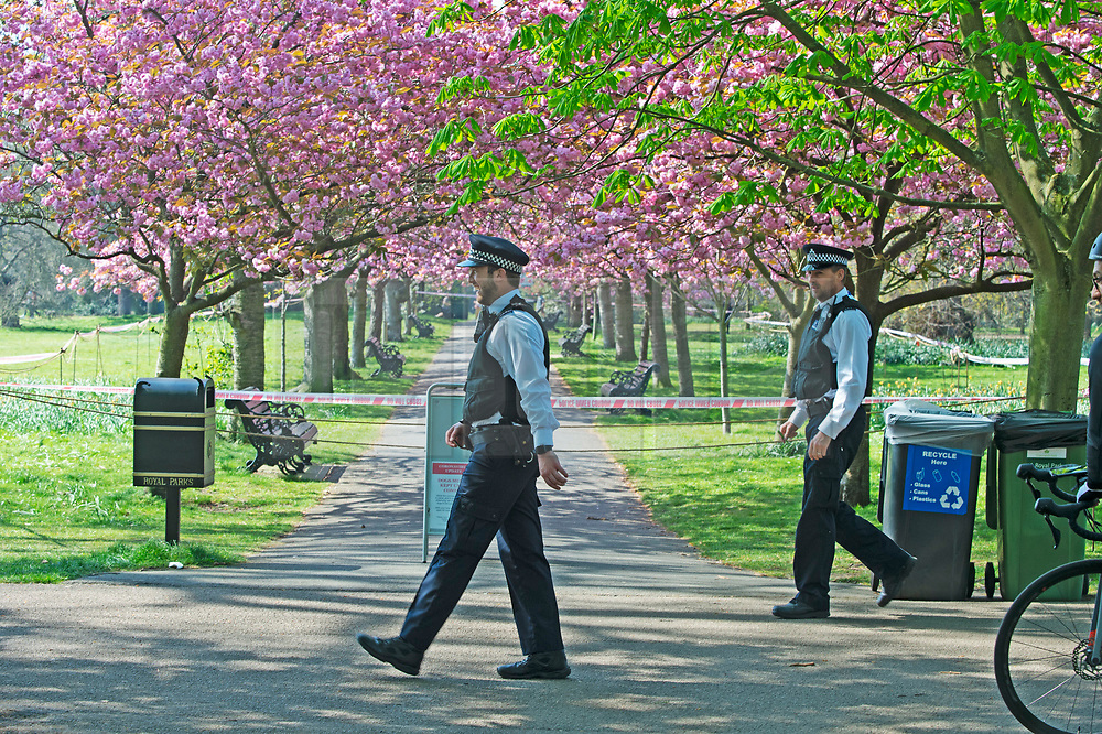 ©Licensed to London News Pictures 10/04/2020  <br /> Greenwich, UK. The famous cherry blossom trees in Greenwich park, London have been cordoned off by police over Coronavirus social distancing fears. Photo credit:Grant Falvey/LNP