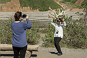 A visitor holds up a pair of Elk antlers during a stop at the Teklanika River in Denali National Park Alaska. Denali National Park and Preserve encompasses 6 million acres of Alaska's interior wilderness.