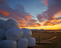 Plastic Covered Hay Bales at the Smylabjörg Farm and Guesthouse on the East Coast of Iceland.  Image taken with a Nikon Df camera and 24 mm f/1.4G lens (ISO 100, 24 mm, f/1.4, 1/500 sec).