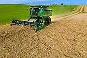 A combine works a field of wheat near Denmark Wisconsin