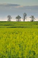 Landscape, Werbkowice-Zamosc, Poland