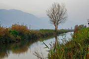 Israel, Hula Valley, Agmon lake winter January