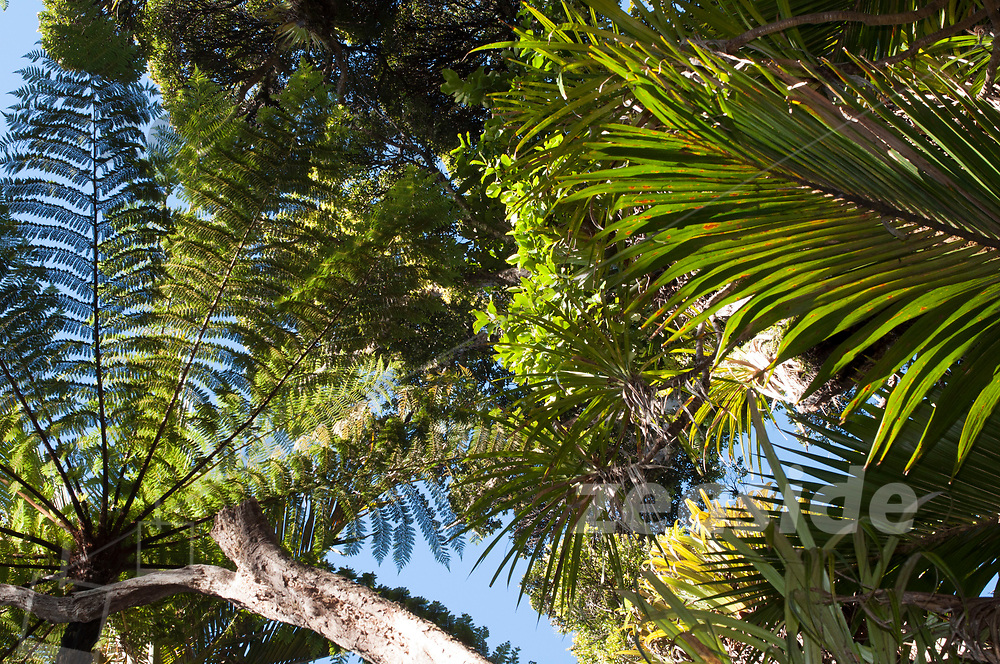 Looking up from the coastal Heaphy Track.