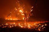 2020 Fire Season