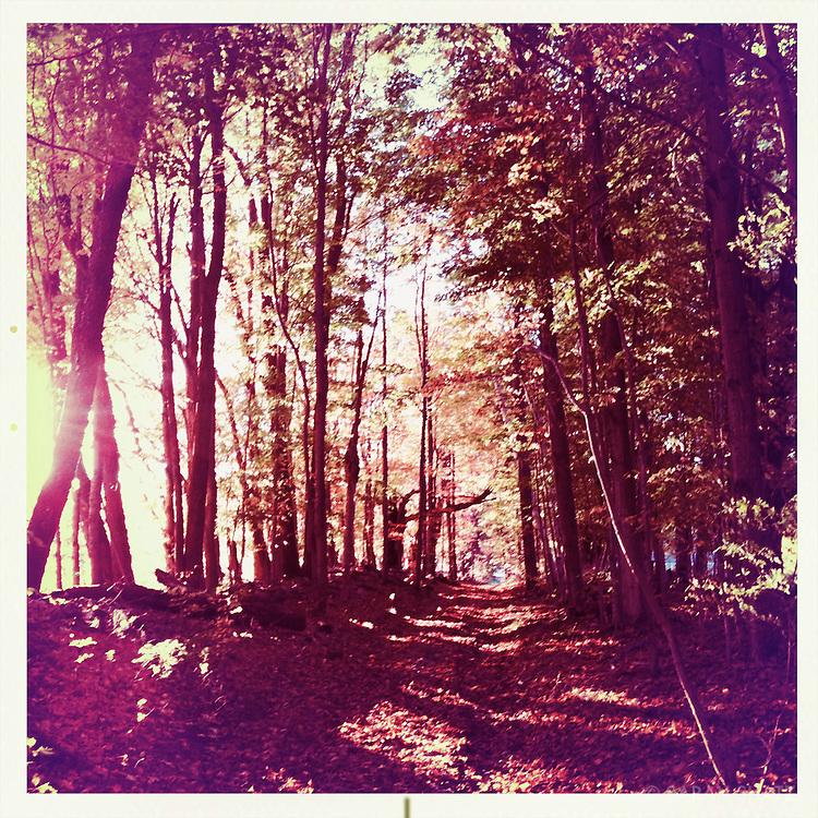 Trail, Mount Greylock