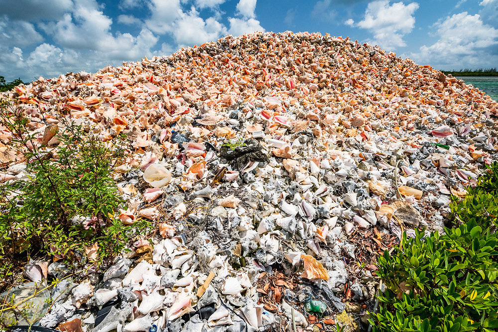 A conch midden, or pile of conch shells, East End, Grand Bahama.