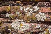 White, yellow lichen pattern, Grand Staircase Escalante National Monument, Utah, USA. Lower Calf Creek Falls trail.