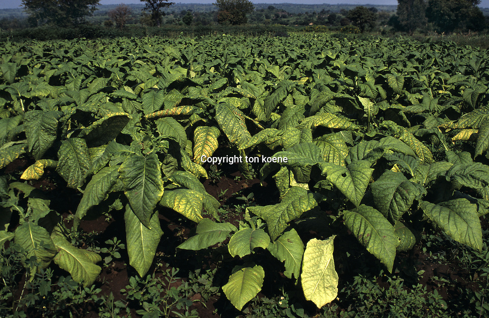 agricultural activities in Uganda