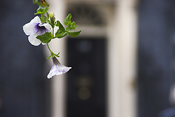 September 7, 2017 - London, England, United Kingdom - Flowers are pictured at Downing Street, London on September 7, 2017. (Credit Image: © Alberto Pezzali/NurPhoto via ZUMA Press)