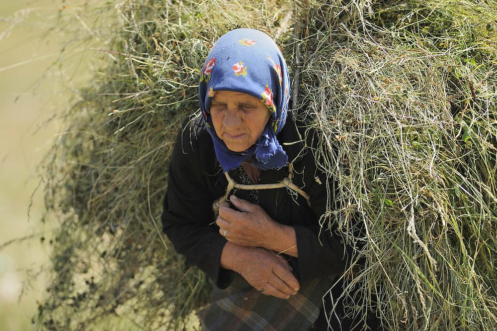 Farmer woman with heavy hay-load. Lake Prespa National Park, Albania June 2009
