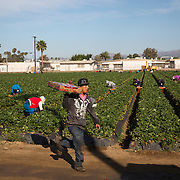 Pesticide spraying in the strawberry fields of Oxnard, California has raised concerns among environmentalists as well as high school students and teachers. The fields are immediately adjacent to Rio Mesa High School and Oxnard High School where students engage in outside, athletic training including running track and field. Please contact Todd Bigelow directly with your licensing requests.