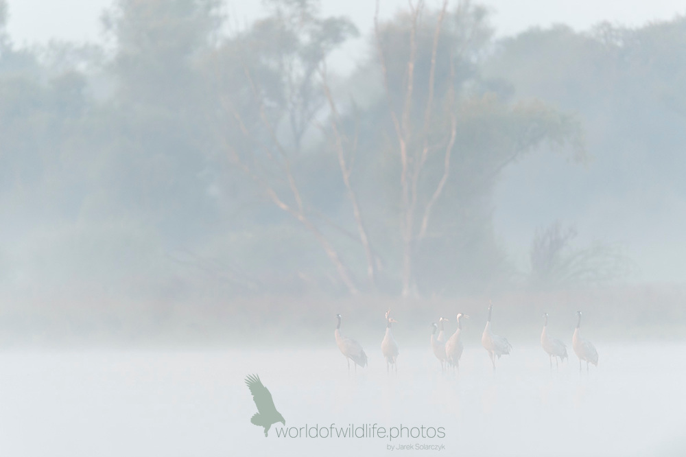 Cranes in the fog