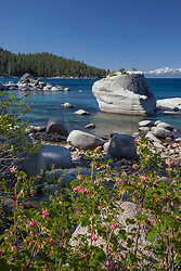 """""""Wildflowers at Bonsai Rock 2"""" - These wildflowers were photographed along the East shore of Lake Tahoe at Bonsai Rock."""