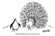 """""""Sorry, I thought you were someone else."""" (a cartoon from Punch shows a Peacock mistaking a Penguin for a Peahen in its mating ritual)"""
