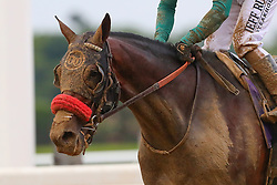 June 9, 2018 - Hempstead, NY, U.S. - HEMPSTEAD, NY - JUNE 09:  Blended Citizen ridden by Jockey Kyle Frey after the 150th Belmont Stakes on June 9, 2018 at Belmont Park in Hempstead, NY.    (Photo by Rich Graessle/Icon Sportswire) (Credit Image: © Rich Graessle/Icon SMI via ZUMA Press)