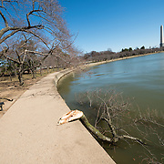 Each spring about 1,700 cherry trees around the Tidal Basin bloom in a colorful but brief floral display that brings large numbers of visitors to the region. Strong winds overnight claimed a branch from one of the trees.