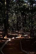 Goiania_GO, Brasil...Parque Bosque dos Buritis em Goiania, Goias...Bosque dos Buritis Park in Goiania, Goias...Foto: BRUNO MAGALHAES / NITRO