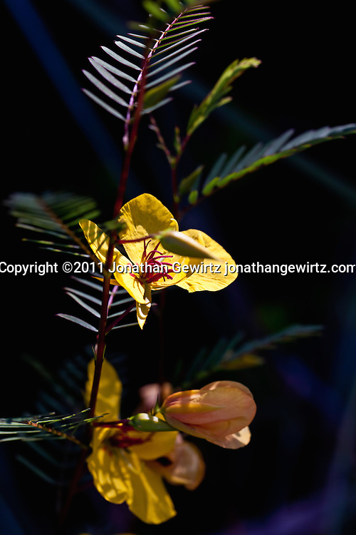 A small flowering plant in the Florida Everglades. WATERMARKS WILL NOT APPEAR ON PRINTS OR LICENSED IMAGES.