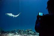 Nederland, Arnhem, 20-8-2014Het tropisch aquarium Burgers Ocean van dierenpark Burgers Zoo. Bezoekers maken een foto met hun mobile,telefoon,smartphoneFoto: Flip Franssen/Hollandse Hoogte