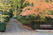 A Park bench, a walking path and some fall foliage near the transit loop in Stanley Park - Vancouver, British Columbia, Canada.