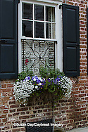 66512-00215 Window box with pansies, snapdragons, and allysum on brick building with blue shutters. Charleston, SC