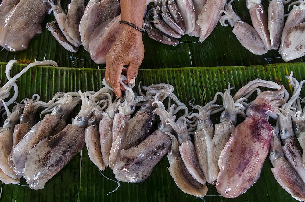 Squid in Fish Market<br /> Biak Island<br /> West Papua<br /> Indonesia