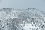 Scenic winter landscape with covered in snow forest, Shirakawa-go, Japan