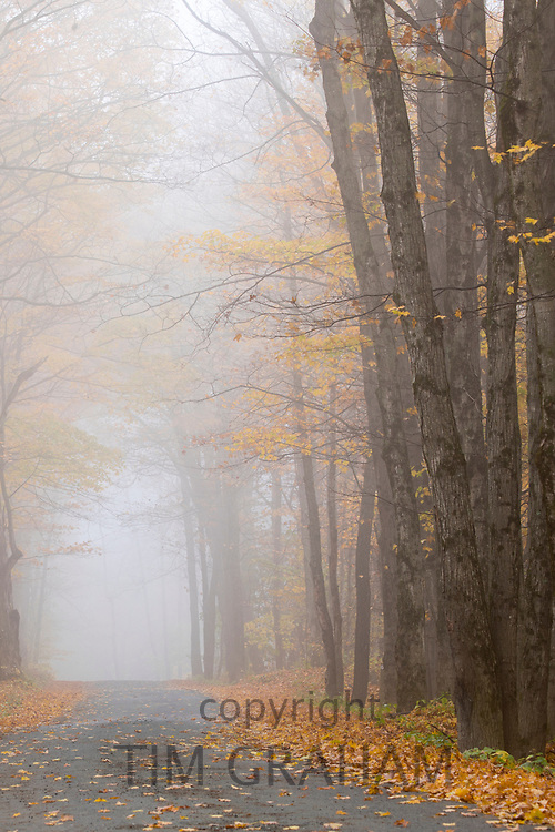 Misty empty road in The Fall in Vermont, New England, USA
