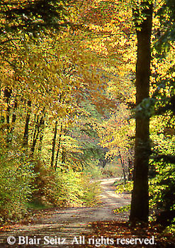 Wilderness Roads, Art Print, PA landscapes, Allegheny National Forest, Warren Co., PA