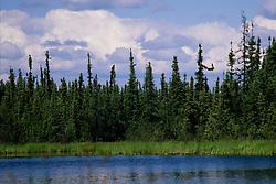 Cloudberry Lake, Fairbanks, Alaska, US