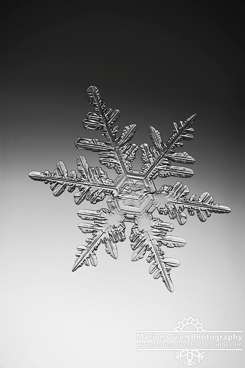 Extreme macro view of a real snowflake, photographed in situ through a microscope in Anchorage, Alaska.