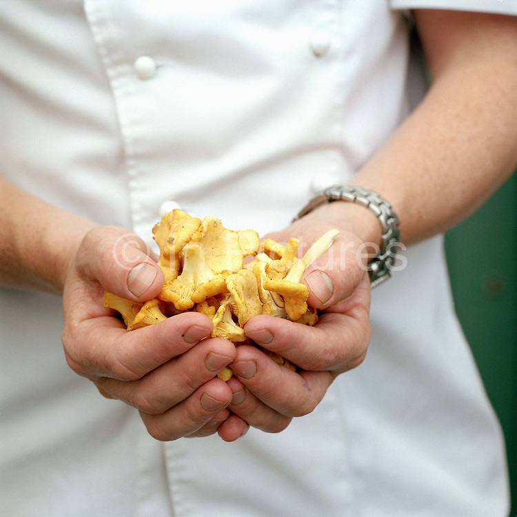 Chef Tom Kitchin holding fresh girolles (mushrooms) at his restaurant The Kitchin in Leith, Edinburgh, Scotland. Tom and Michaela Kitchin opened their restaurant, The Kitchin on Edinburgh's Leith waterfront in 2006. The Kitchin presents modern British seasonal cuisine influenced by French cooking techniques and an appreciation of the best quality ingredients available from Scotland's natural larder.