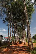 Rubber walk<br /> Mabaruma<br /> GUYANA<br /> South America
