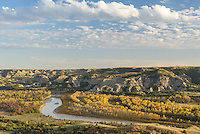Golden cottonwood trees line the banks of the Little Missouri River in the north unit of Theodore Roosevelt National Park.