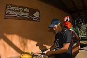 Staff member at the Baia Bonito Farm in Bonito, Mato Grosso do Sul, cuts fruit while a Red and Green Macaw, Ara chloropterus, perches on his shoulder.