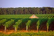 New York, Macari Vineyard, Mattituck, Long Island, North Fork, Barn
