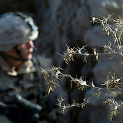 Thorns from a dead plant hang from a mud wall where a Canadian soldier stands watch during the Canadian lead Operation Tashwish Mekawah in a joint operation with Afghan National Army (ANA) soldiers in the Sangasar and Howz-E-Madad area in the volatile Zhari District in Afghanistan.