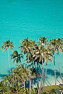 Palms and reef, Lanikai Beach, Oahu, Hawaii