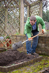Planting an asparagus bed. Digging a trench
