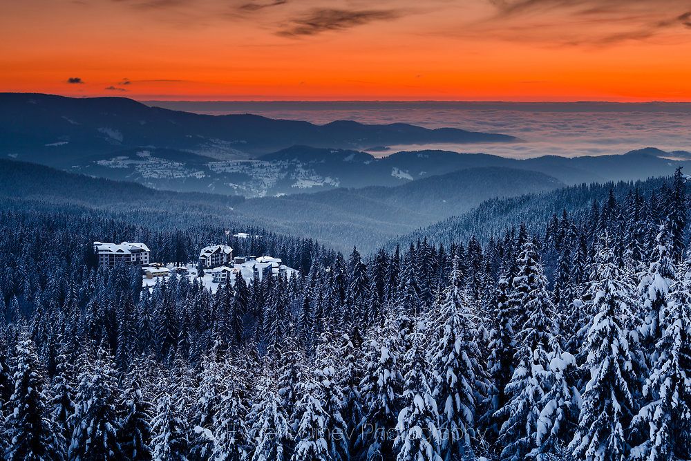 Endless pine forests covered in snow