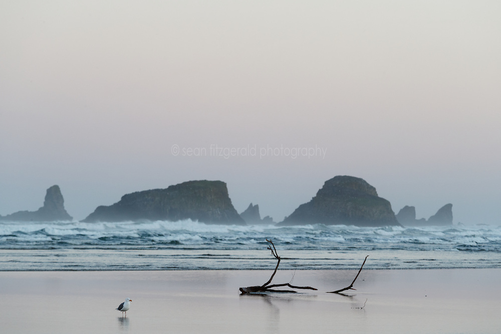 Seagulls and sea stacks from Cannon Beach. Ecola State Park, Oregon, USA.