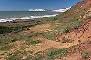 Isle of Wight - undercliff, Freshawater Bay