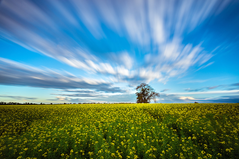 Long exposure of dramatic clouds over canola field