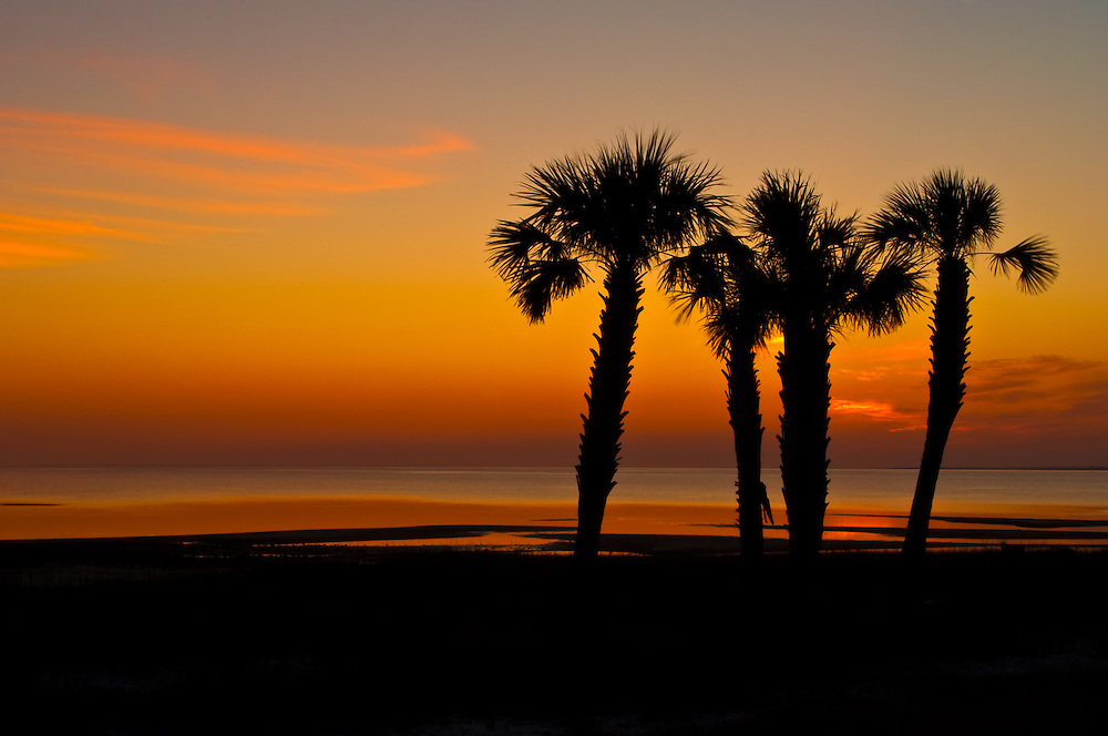 Sabal palms in silhouette on a glorious sunset over Apalachicola Bay.