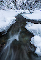 Fresh snow along Clark Brook in the Green Mt. National Forest, Vermont