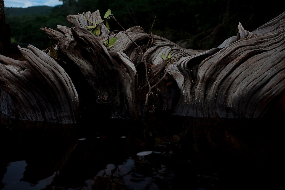Sao Goncalo do Rio Preto_MG, Brasil...Circuito Estrada Real, na foto  Parque Estadual do Rio Preto, em Sao Goncalo do Rio Preto, Minas Gerais. Detalhe do tronco de uma arvore no riacho...The circuit Estrada Real (Real Road Circuit), in this photo the Rio Preto State Park, in Sao Goncalo do Rio Preto, Minas Gerais. In this photo the trunk tree in the watter...Foto: LEO DRUMOND / NITRO