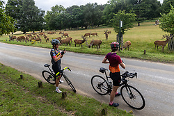 Licensed to London News Pictures. 06/08/202. London, UK. With the weather more like September, cyclists stop to snap a herd of stags in Richmond Park, southwest London as wind and rain is set to hit the South East today. Yellow weather warnings for England have been issued for heavy rain, flooding, and high winds as the bad weather is expected to continue throughout the weekend. However brighter weather is forecast for next weeks with highs of 22c. Photo credit: Alex Lentati/LNP