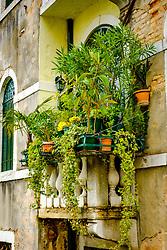 A balcony covered in plants in Venice, Italy<br /> <br /> (c) Andrew Wilson | Edinburgh Elite media