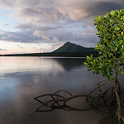 Mangrove in the bay of Black River with Tourelle du Tamarin Mountain the background